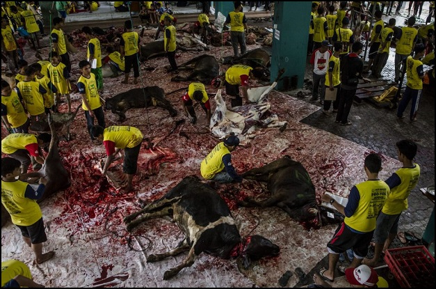 indonesia-cow-slaughter-1